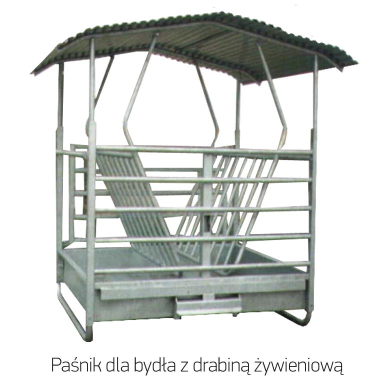 10_pasnik_z_drabina